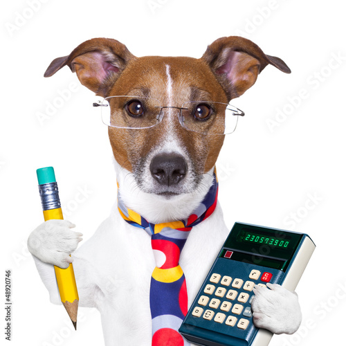 secretary dog - 48920746