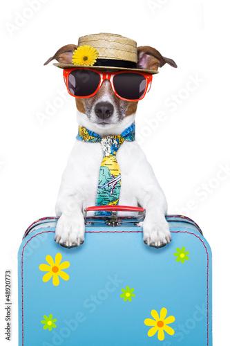 Staande foto Dragen holiday dog