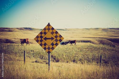 Cows in in a pasture  - Drumheller Alberta - LOMO - 48922594