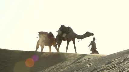 Teamster pulling two camels across the desert.