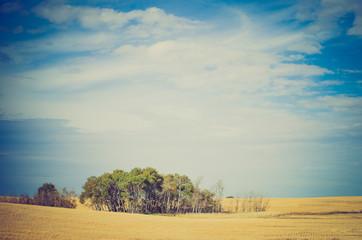 Wheat field after harvest - Drumheller Alberta - LOMO