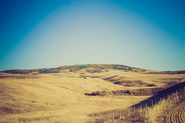 Grassland field at sunset - Drumheller Alberta - LOMO