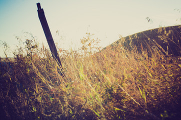 Tall grass at sunset - Drumheller Alberta - LOMO