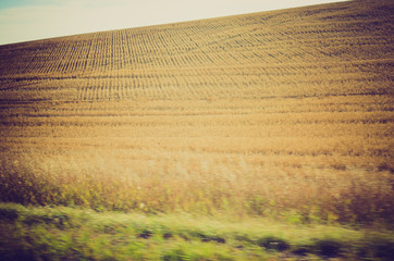 wheat field harvesting done - Drumheller Alberta - LOMO