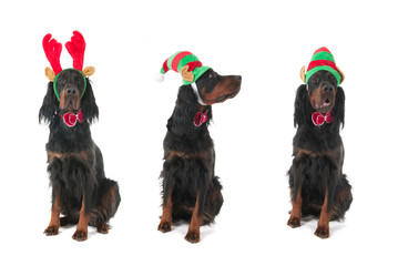 Dogs for Christmas