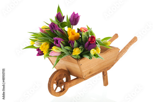 Wheel barrow full tulips