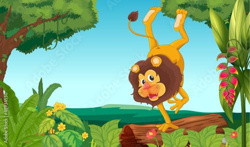 A lion showing off