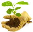 main gantée offrant un jeune arbre