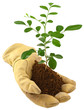 concept protection de la nature, gant et jeune arbre