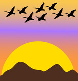 migratory birds on sunset or dawn