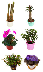 Set of houseplant in  pots. Isolated on white