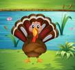 A turkey standing in the riverside