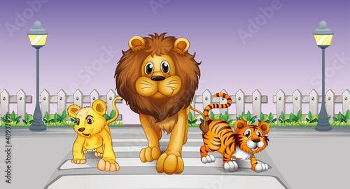 Wild animals in the street