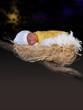 nascita