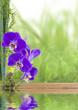 concept bien-être, nature, détente, massage