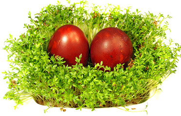 Easter eggs and cress