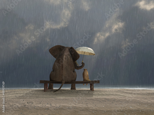 Plakát, Obraz elephant and dog sit under the rain