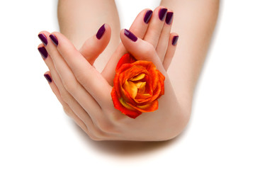 Beautiful manicure with a rose on a white background