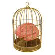 Birdcage with a brain inside