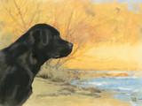 Fototapeta czarujący - kontur - Zwierzę domowe