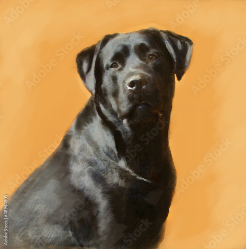 oil painting portrait of black labrador male