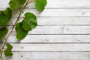 Grapevine leaves on wooden background