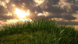 grassy hill with chamomile and ladybird, beautiful 3d animation