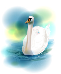 illustration of the white swan