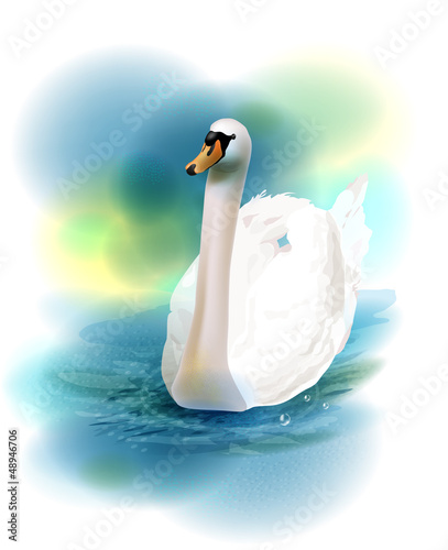 illustration of the white swan