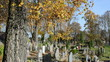 people care family graves beautiful autumn cemetery graveyard