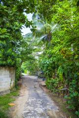 Weg durch eine Dschungel-Landschaft