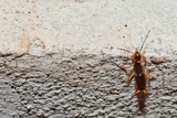 A pincer on a wall poster