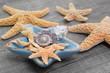 Strandgut - maritime Dekoration mit Muscheln und Seesternen