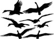 Set of silhouettes of flying geese