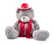 dressed teddy bear. isolated