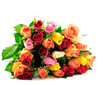 Roses Rainbow Flat on White Background