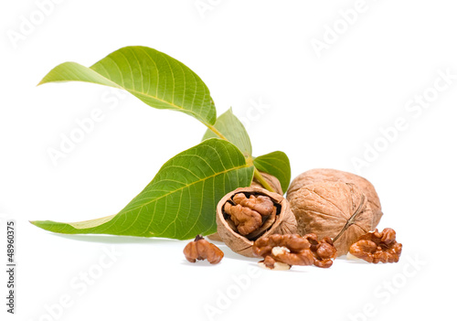 Circassian walnut isolated on white background