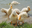 Duckling's cleaning