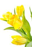 Fototapeta Wielkanoc - kwiatowy - Kwiat