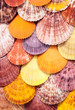 Scallop background.
