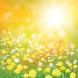 Fototapety Vector of sky background with yellow dandelions.