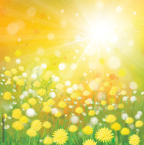 Vector of sky background with yellow dandelions.