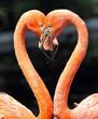 Flamingos 3