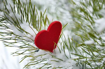 Red heart in pine needles covered with snow