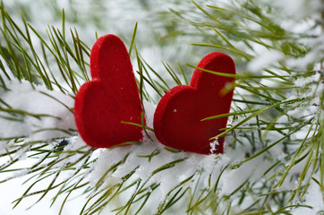 Two red hearts in pine needles covered with snow