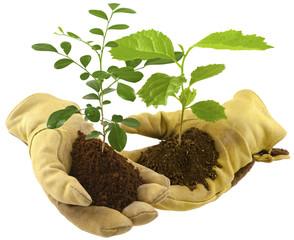 échange de plantes entre jardiniers, reforestation