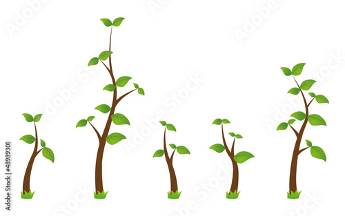 set of five green branches