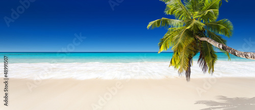 Leinwandbilder,seychelles,strand,coconut palm,palm tree