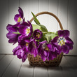 purple tulips in a basket - old  style