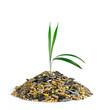 Grashalm wächst aus einem Häufchen Saatgut